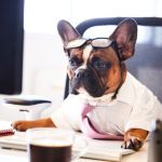 Dogs in the Workplace! Yes or No?
